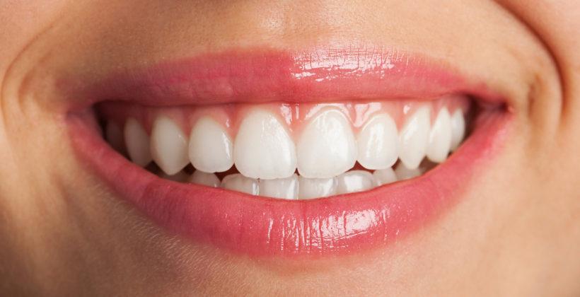 Tipos de dientes y sus funciones